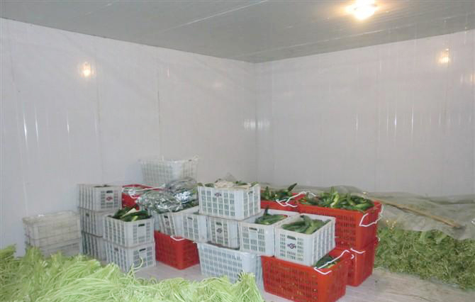 CBFI-cold room for fruit and vegetable | Fruit Vegetable Cold Room | CBFI-2