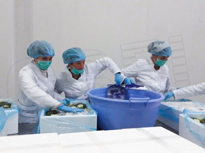 乌兹别克斯坦2台2.5吨和1台5吨片状制冰机