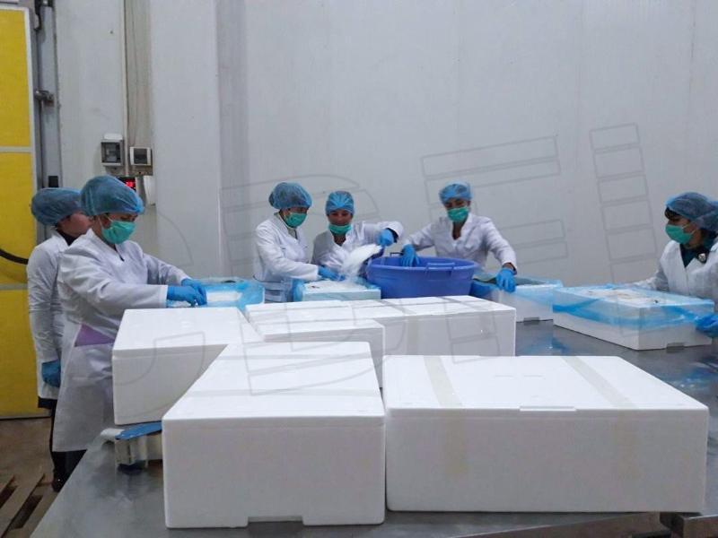 2 sets 2.5 ton and 1 set 5 ton Flake Ice Machine from Uzbekistan